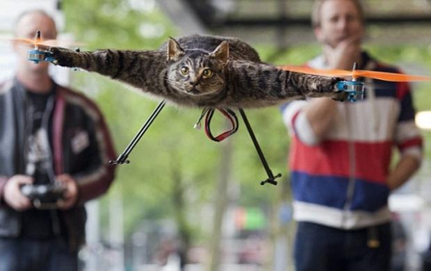 חתול - פוחלץ - מסוק - מה לעזאזל
